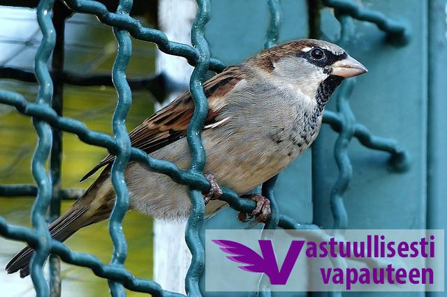 lintu vastuullisesti vapauteen